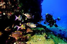plongee sous marine ils maurice