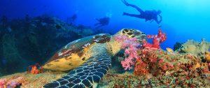 2-plonger-thailande-tortue-faune-sous-marine